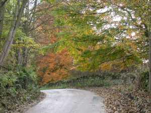 Autumn colours coming down to Armathwaite